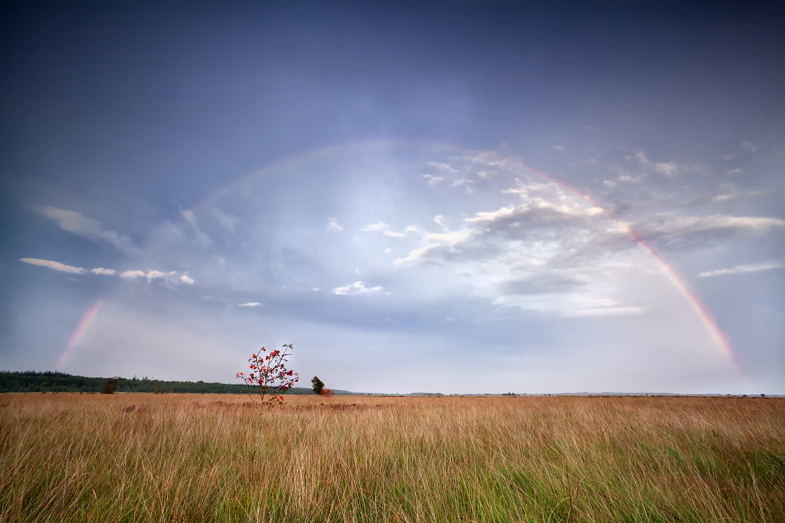 bigstock-Rainbow-Over-Rowan-Tree-After-51450871